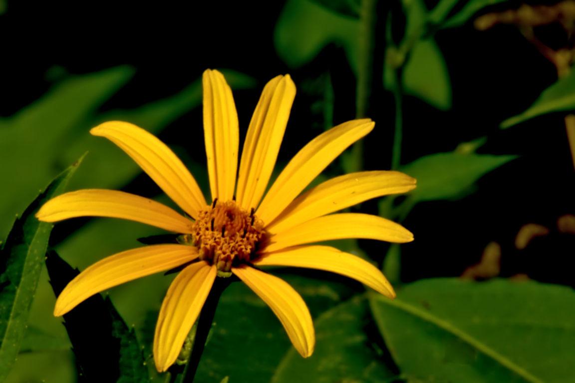 Bright-yellow-wildflower[1]