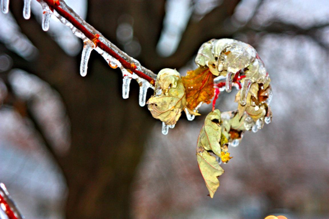 icy leaf(small)